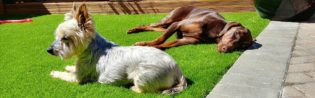 Artificial Grass Beneficial For Pets